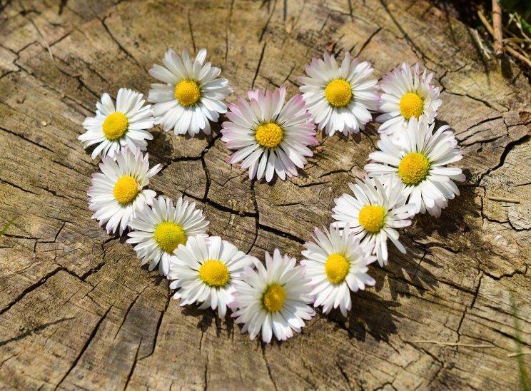 daisies-712892_1280