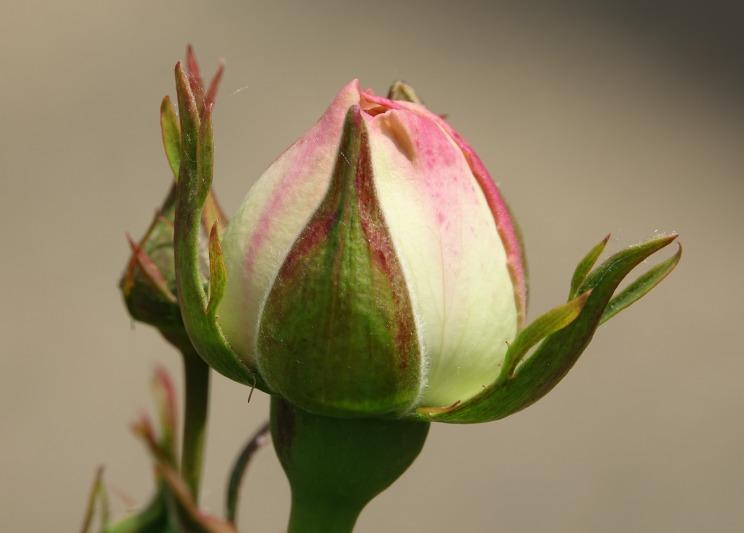 pink-3382525_1920