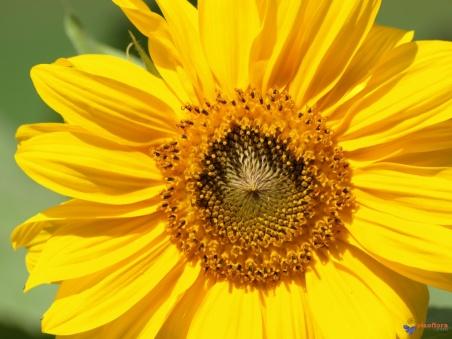 soleil-d-ete-pour-un-doux-automne-visoflora-19436