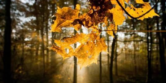 Pourquoi-l-automne-commence-le-22-septembre-et-pas-le-21