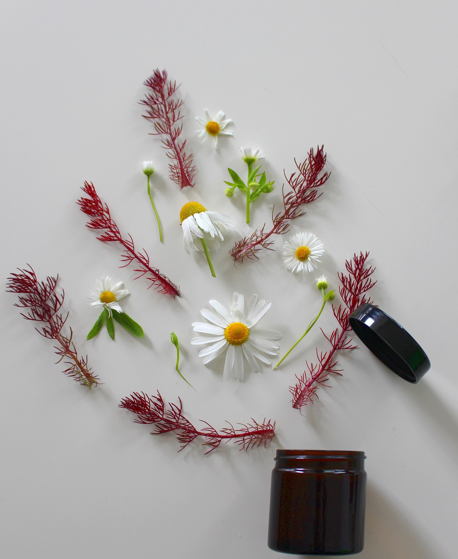 medicinal-flower-4246065_1920